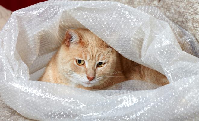 dicas organizar mudança bichos estimação pets cachorro gato